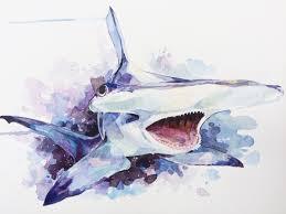 hammerhead shark in space watercolour 12 x 16in imgur