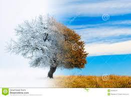 seasons change stock illustration image 49596310