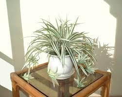 artificial spider plant floral decor ebay