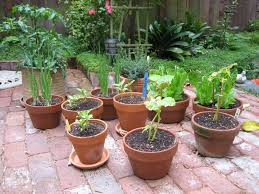 Vegetable Gardening In Pots by Vegetable Container Garden Archives I Love You More Than Food