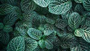 green plants plants are ring up photosynthesis helping absorb all our