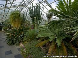 garten köln bilderbuch k禧ln botanischer garten flora tropenhaus
