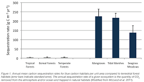 Trees And Their Meanings by Blue Carbon U2013 The Blue Carbon Initiative