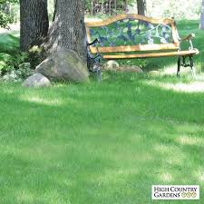 no mow lawn grass seed low water plants eco friendly landscapes
