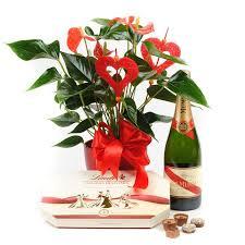flower gift anthurium chagne chocolate box flower gift flower gift