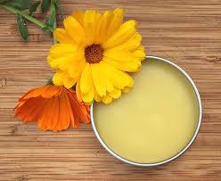 Calendula Flowers 168 Best Calendula Learn Herbs Images On Pinterest Herbal