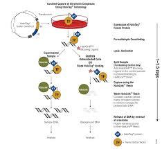 biotechniques halochip antibody free chip