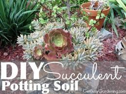 Soil Mix For Container Gardening - best 25 succulent soil ideas on pinterest growing succulents