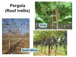 Roof Trellis Trellising Of Grapevines Increasing Yield And Quality Ppt Video