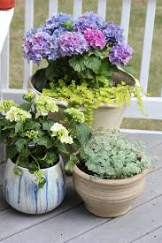 Plants For Patios In The Shade Potted Plants Flowers Add Color To Patio Makeover