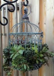 how to plant succulents in a birdcage craftberry bush