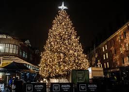 9 christmas trees in new york worth seeing irl bonus tip