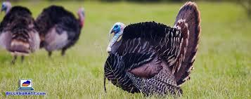 Are Mcdonalds Open On Thanksgiving Restaurants Open On Thanksgiving In Kentucky U0026 Tennessee
