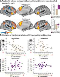 parallel regulation of memory and emotion supports the suppression