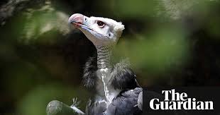 sle resume journalist position in kzn wildlife ezemvelo accommodation vultures face extinction as gamblers seek visions of the future