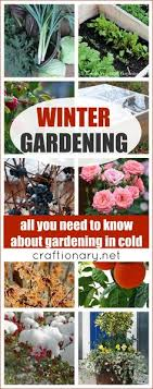 Winter Gardening Ideas Top 10 Pretty Flowers And Shrubs For Winter Cold Weather