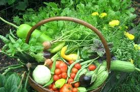 fruit and vegetable basket fruit vegetable garden hydraz club