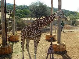 Ottoman Zoo Paphos Zoo Peyia
