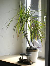 bureau logement toulon bureau logement toulon maison design edfos com