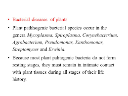 Bacterial Diseases Of Plants - microbial diseases of plants and plant pathogens ppt download