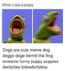 Kermit The Frog Meme - when u see a puppy dogs are cute meme dog doggo doge kermit the frog