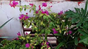 common house plants and their names fun gardening 8 sep