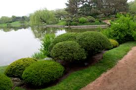 ideas types of shade loving shrubs and types of bushes design
