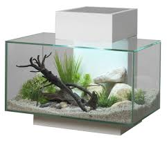 Fluval Edge Aquascape Fluval Edge 23 Litre Aquarium In White Gardensite Co Uk