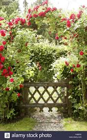 garden wooden gate rose arch climbing roses summer entrance