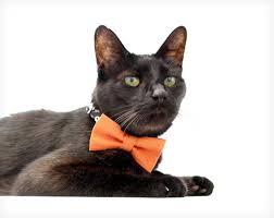 Halloween Cat Skeleton Halloween Bow Tie Collar Set
