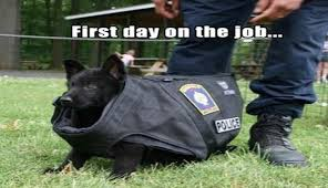 Law Dog Meme - i can has cheezburger service dogs funny animals online