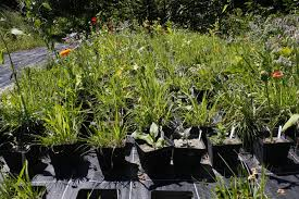 planting the seeds of innovation native plants gardening app successful plants take the lead