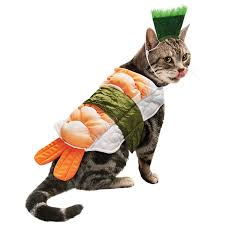 dog clothes for halloween 7 hilarious cat costumes for halloween dog cat and other pet