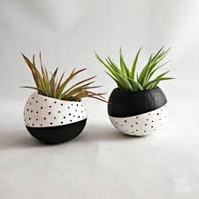 inverse mini air plant pod black white dots with air plants