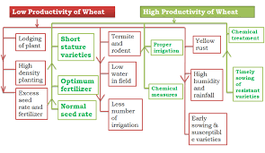 problem solution tree for low productivity of wheat