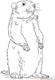 draw groundhog step step drawing tutorials