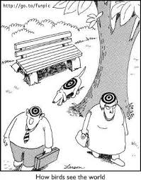 Meme Stories - birds eye view random meme stories pinterest birds eye view