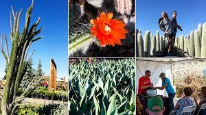 Garden Botanicals Fall Garden Recap Waterwise Botanicals Throws Us Into A