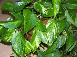plante d駱olluante chambre les plantes dépolluantes