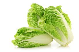 cabbage china cabbage otc otc