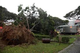 heavy morning downpour causes trees to fall affecting traffic