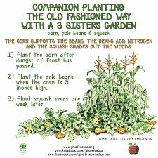 Companion Gardening Layout Companion Garden Layout Of Companion Gardening Pinterest Home