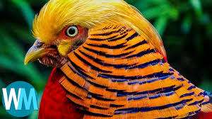 birds images Top 10 most stunningly beautiful birds in the world jpg