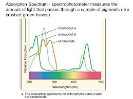 the absorption of light by photosynthetic pigments worksheet answers chapter 7 photosynthesis ppt video online download