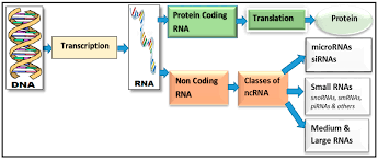 genes free full text a review of computational methods for