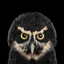 The Owl Barn Gift Collection Who U0027s Who Audubon