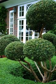 Topiary Plants Online - front yard with topiary plants using topiaries for landscaping