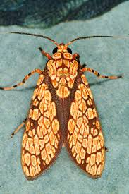 Rug Bugs 223 Best Cute As A Bug In A Rug Images On Pinterest Nature