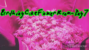Led Grow Lights Cannabis Led Grow Lights Review Best Grow Light Legal Marijuana Grow
