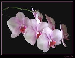 Glosario y propiedades mágicas de las plantas Images?q=tbn:ANd9GcRfkcjOPg1BuDTnDQI-ehZCt-0qPaIiGEfje8w2Y-4GJemZNHsx5g